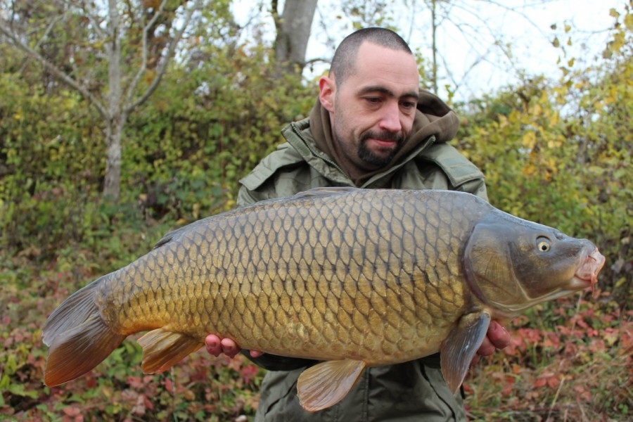Another hard fighting common
