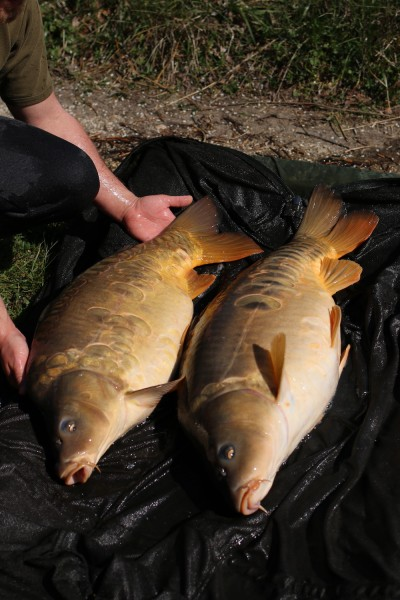 A lovely brace of scaleys for Jack